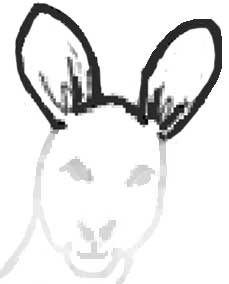 Draw the ears